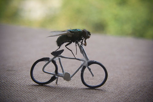 The Fascinating Adventures of Mr. Fly