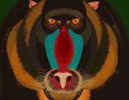 MattLamont-Monkey-Illustrations-02