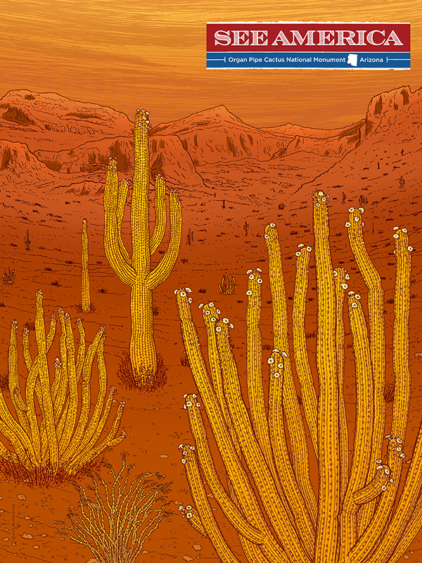 10354 Organ Pipe Cactus National Moument by Brixton